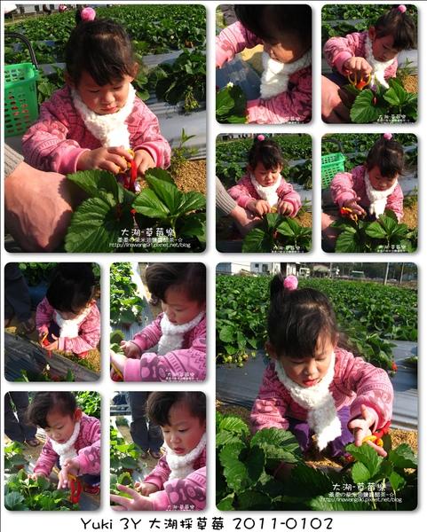 2011-0102-大湖採草莓 (28).jpg