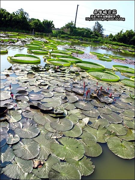 吳厝楊家莊-2010-0815 (5).jpg