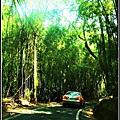 油桐花坊-二旁有竹林.jpg