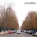 大陸-青島市街道.jpg