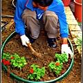 請人整修花園-多加鳳仙花.jpg