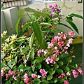 夏天到頂樓的花都開了.jpg