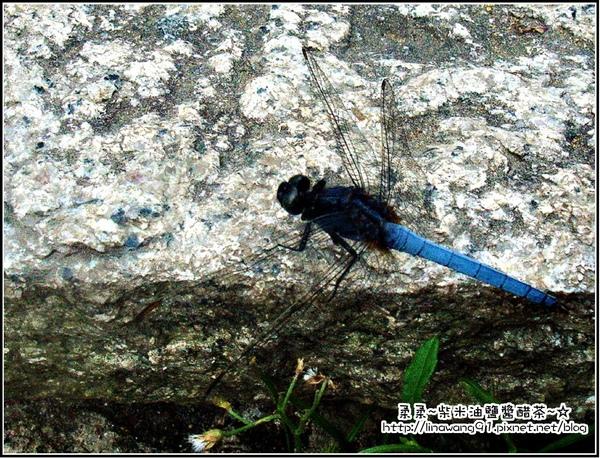 獅頭山遊客中心-蜻蜓.jpg