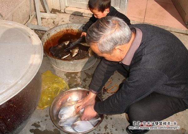 大陸-青島-忙著切魚忙著玩魚.jpg