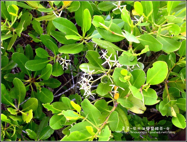 2009-0803新豐紅毛港紅樹林遊憩區 (9).jpg
