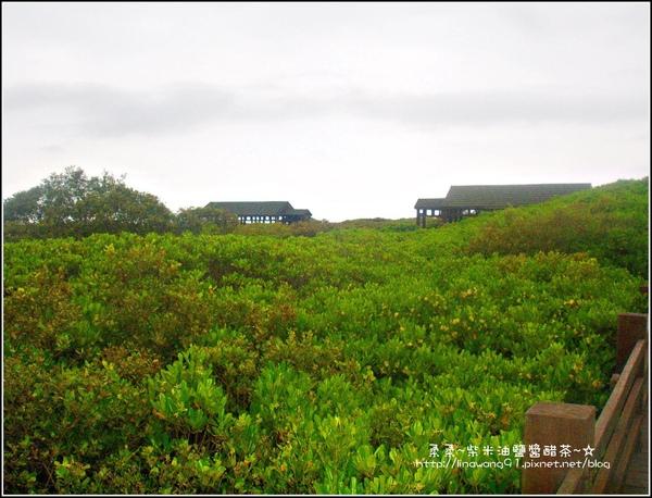2009-0803新豐紅毛港紅樹林遊憩區 (10).jpg