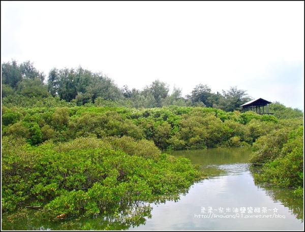 2009-0823-新豐紅毛港紅樹林遊憩區 (7).jpg