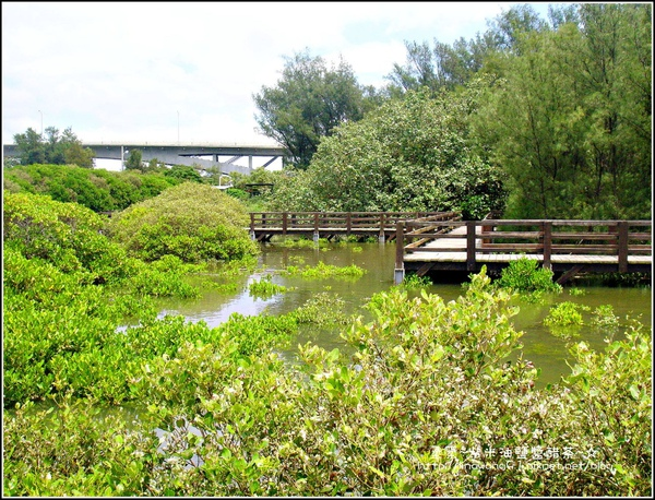 2009-0823-新豐紅毛港紅樹林遊憩區 (10).jpg