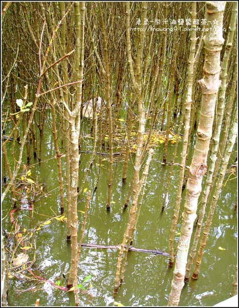 2009-0823-新豐紅毛港紅樹林遊憩區 (14).jpg