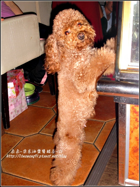 泰迪熊咖啡館 2009-0925 (20).jpg