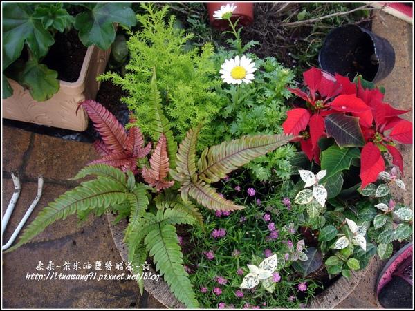 2009-1222-聖誕節盆景 (5).jpg