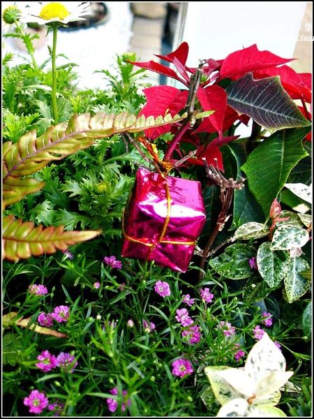 2009-1222-聖誕節盆景 (11).jpg