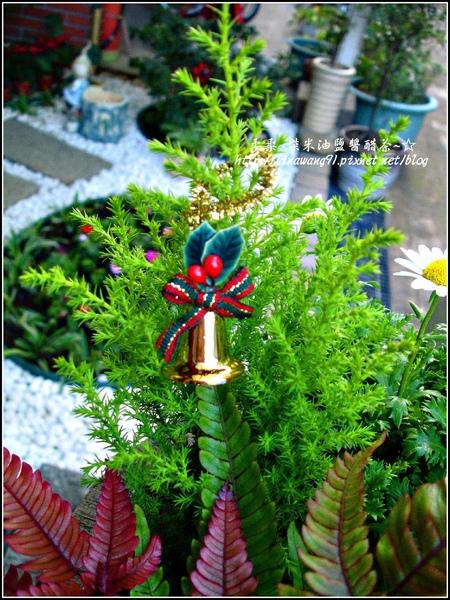 2009-1222-聖誕節盆景 (12).jpg