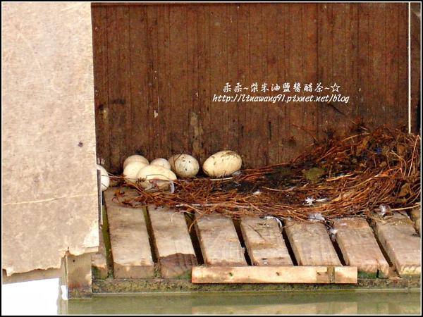 2009-1116-荷塘居 (60).jpg