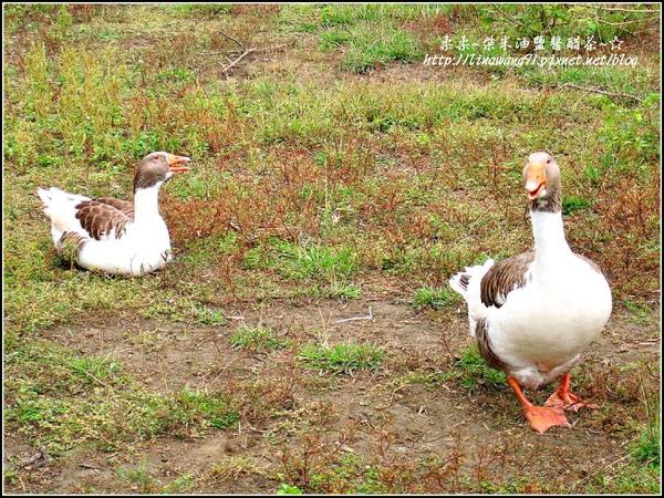 2009-1116-荷塘居 (63).jpg