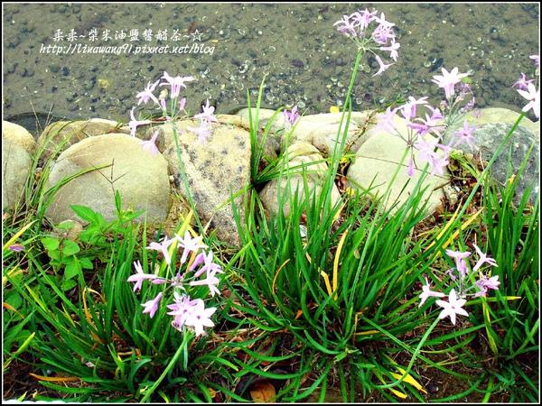 2009-1116-荷塘居 (75).jpg