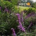 2010-0328-烏樹林 (108).jpg