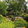 2010-0328-烏樹林 (109).jpg