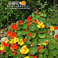 2010-0328-烏樹林 (169).jpg
