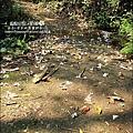 2010-0421-紙糊古道-油桐花之旅 (6).jpg