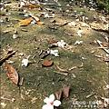 2010-0421-紙糊古道-油桐花之旅 (7).jpg