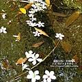 2010-0421-紙糊古道-油桐花之旅 (8).jpg
