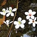 2010-0421-紙糊古道-油桐花之旅 (9).jpg