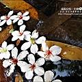 2010-0421-紙糊古道-油桐花之旅 (12).jpg