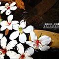 2010-0421-紙糊古道-油桐花之旅 (13).jpg