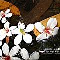 2010-0421-紙糊古道-油桐花之旅 (14).jpg