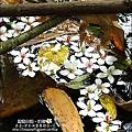 2010-0421-紙糊古道-油桐花之旅 (15).jpg