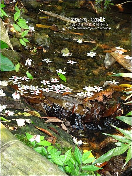 2010-0421-紙糊古道-油桐花之旅 (17).jpg
