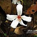 2010-0421-紙糊古道-油桐花之旅 (20).jpg
