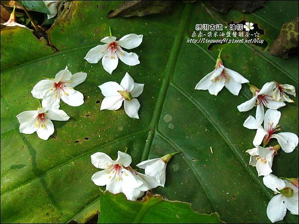 2010-0421-紙糊古道-油桐花之旅 (21).jpg