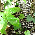 2010-0421-紙糊古道-油桐花之旅 (24).jpg