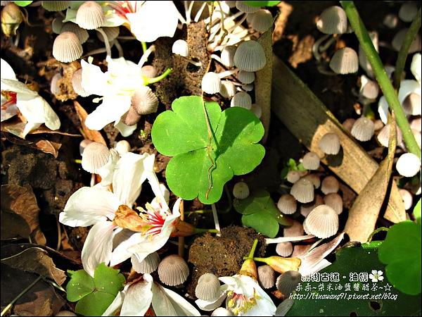 2010-0421-紙糊古道-油桐花之旅 (25).jpg