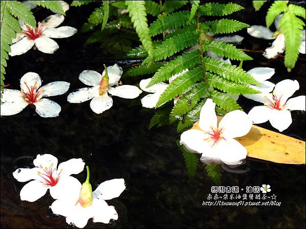 2010-0421-紙糊古道-油桐花之旅 (34).jpg