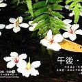 2010-0421-紙糊古道-油桐花之旅 (35).jpg