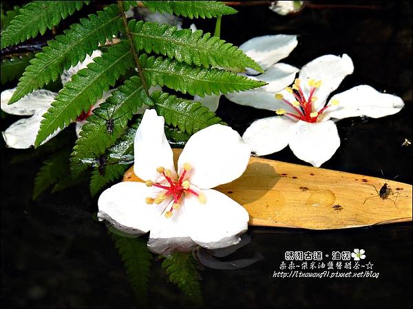 2010-0421-紙糊古道-油桐花之旅 (37).jpg