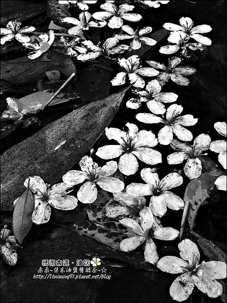 2010-0421-紙糊古道-油桐花之旅 (47).jpg