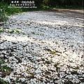 2010-0421-苗栗縣獅潭鄉-相遇桐花林.jpg