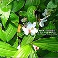 2010-0421-苗栗縣獅潭鄉-相遇桐花林 (3).jpg