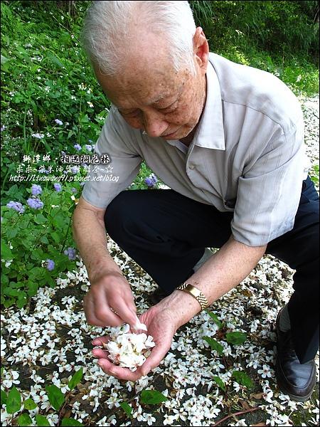 2010-0421-苗栗縣獅潭鄉-相遇桐花林 (6).jpg