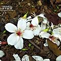 2010-0421-苗栗縣獅潭鄉-相遇桐花林 (16).jpg