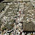 2010-0421-紙湖農場-油桐花之旅 (10).jpg