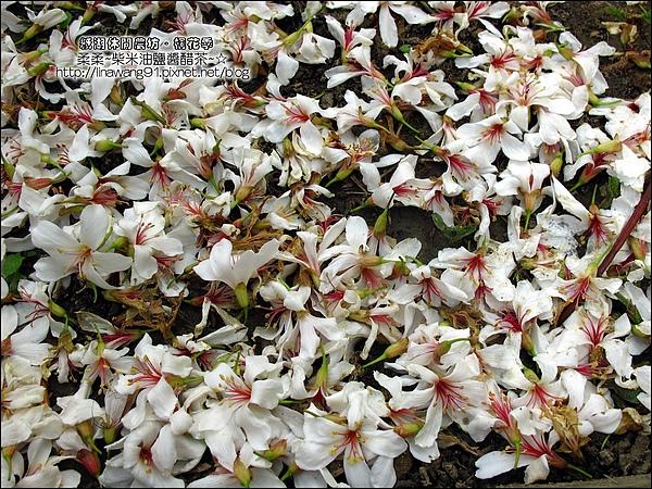 2010-0421-紙湖農場-油桐花之旅 (15).jpg