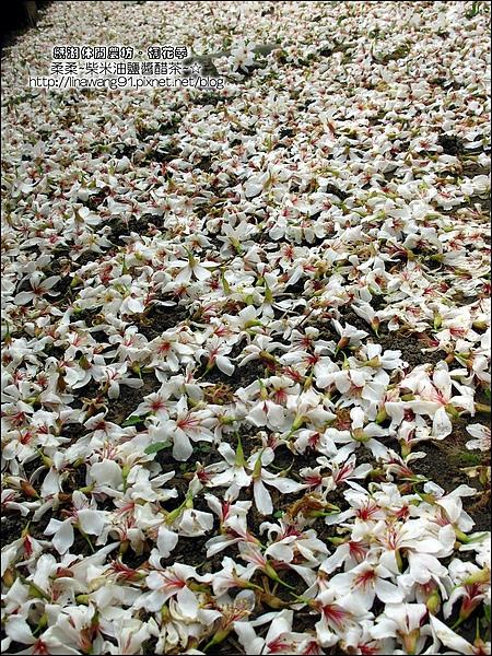 2010-0421-紙湖農場-油桐花之旅 (16).jpg