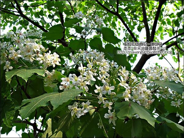 2010-0421-紙湖農場-油桐花之旅 (19).jpg