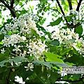 2010-0421-紙湖農場-油桐花之旅 (21).jpg