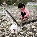2010-0421-紙湖農場-油桐花之旅 (25).jpg